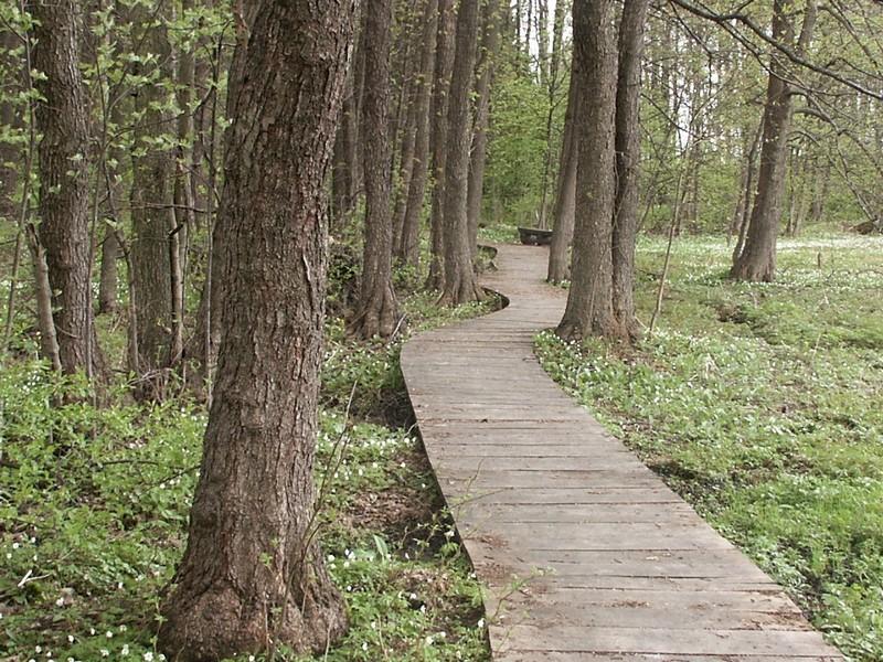 Dřevěný chodník zvyšuje komfort pohybu návštěvníků